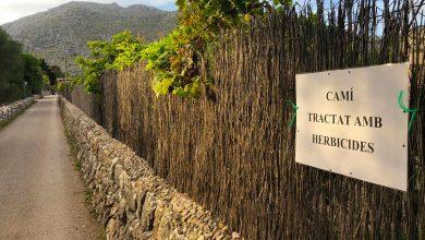 Photo of Alternativa per Pollença denuncia l'ús d'herbicides