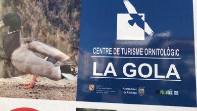 Photo of El Centre de Turisme Ornitològic La Gola torna a obrir les portes el dissabte