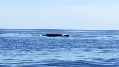 Photo of Avistament d'un cetaci de grans dimensions a prop de Formentor