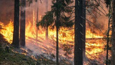 Photo of Arriba a les Balears el fum dels incendis dels EEUU